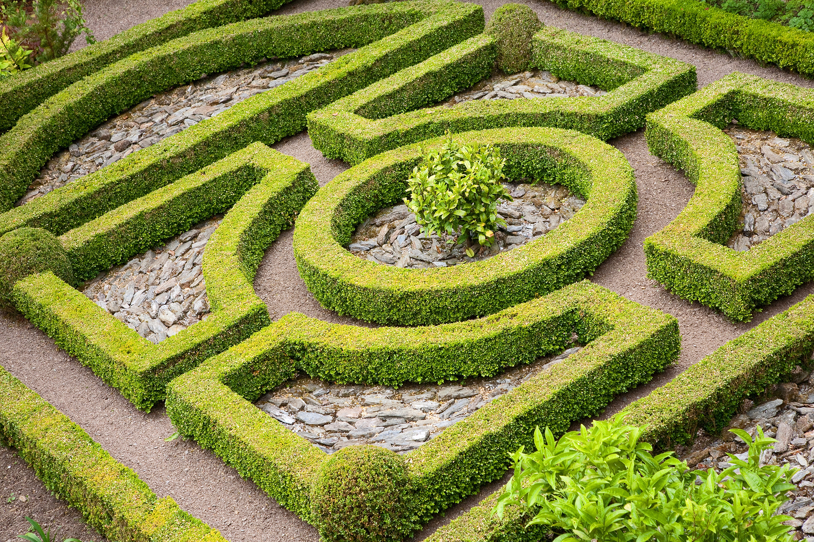 The art of topiary for Art jardin creation