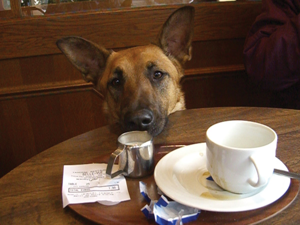 Image result for dog with Coffee